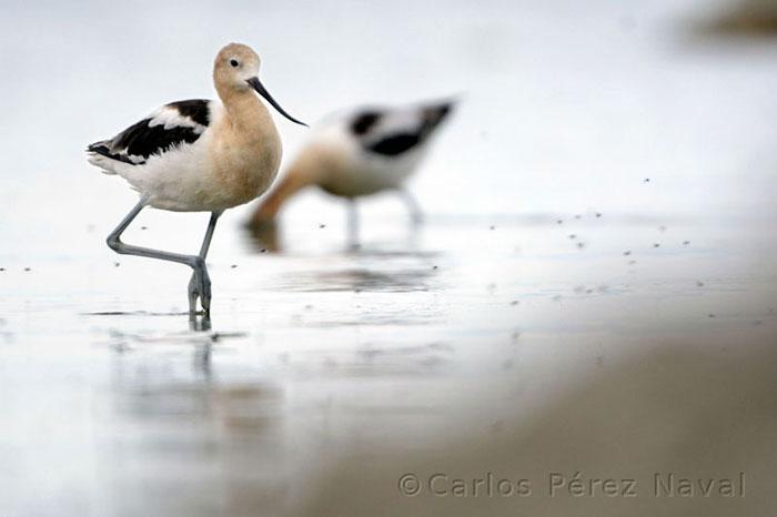 carlos-perez-naval-joven-fotografo-2
