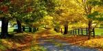 Mevsimlere Göre Fotoğraf Çeşitleri