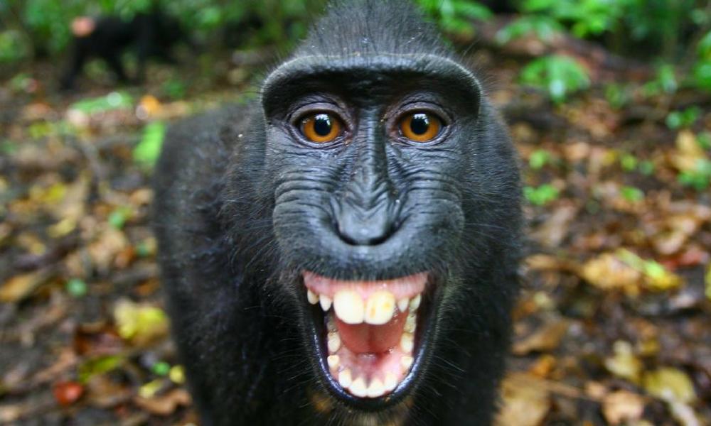 maymun-selfie