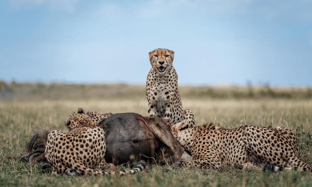 Chris Schmid | Vahşi Doğa Fotoğrafçılığı İçin Fotoğraf Makinesi ve Kit